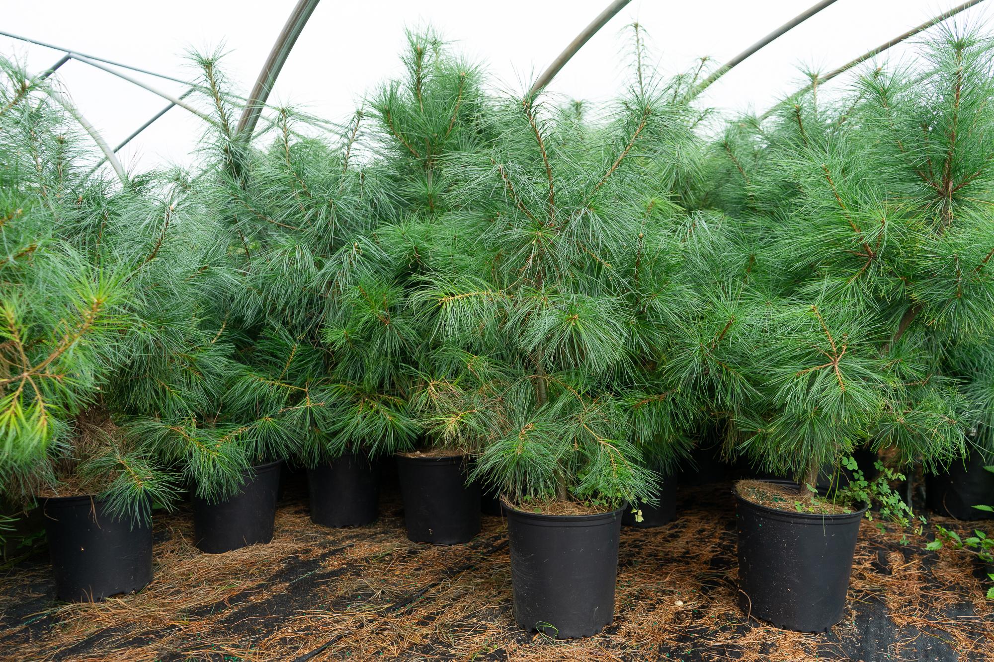 Native Plants-2